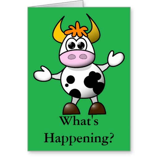 cartoon_cow_whats_happening_card-r487cd956fd9e4c02801a086441c016eb_xvuat_8byvr_512