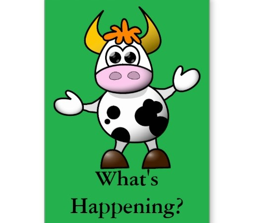 cartoon_cow_whats_happening_card-r487cd956fd9e4c02801a086441c016eb_xvuat_8byvr_512